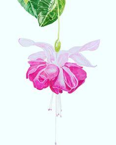 #fuschia #flower #pink #watercolor #watercolour #art #painting