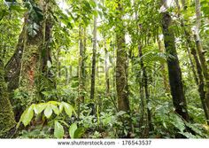 Interior of tropical rainforest in the Upper Amazon Basin in Ecuador - stock…