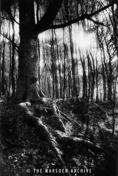 Trees at the entrance to The Valley of No Return, Forest of Paimpont, Brittany, France - Simon Marsden