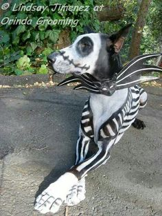 This is the best doggy cotume ever!!! :-)