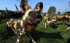 African wild dog park!!