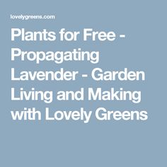 Plants for Free - Propagating Lavender - Garden Living and Making with Lovely Greens