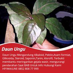 Tawk to obat wasir ibu hamil Planting Flowers, Flower Arrangements, Herbalism, Plant Leaves, Flora, Apothecaries, Kids Education, Healthy, Plants