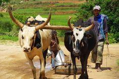 Aujourd'hui j'avais envie de partager avec vous les plus belles photos de mon voyage à Madagascar. Celles-ci ont fait l'objet d'une petite expositionl'année dernière. En octobre 2013, je partais pour un séjour solidaire de 2 semaines à Antsirabé, la troisième plus grande ville de l'île, située à 4h de route au sud de la capitale Antananarivo, au cœur de la région des Hauts Plateaux. Nous sommes surtout resté au niveau d'Antsirabé, sauf pour la visite du parc naturel Ranomafana, à une…