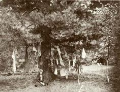 Sacred tree with gifts for the spirit protector  of the place, Khant, 1888. No. 3954-27.  (Russian Museum of Ethnography)