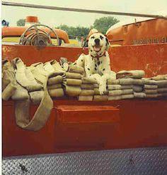 In memory of Hot Dog - Wilburton Fire Department Fire Dog Fire Department, Fire Dept, Hot Firefighters, Firefighter Pictures, Police Dogs, Fire Engine, God Bless America, Dogs Of The World, Working Dogs