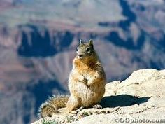 Incredible photo of a squirrel on the edge of a canyon.