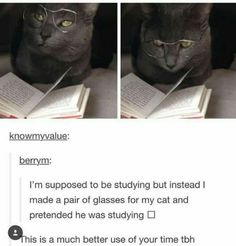 Well spent time cat with glasses studying