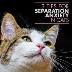 3 Tips for Cats and Separation Anxiety #pets #separationanxiety #cats
