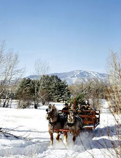 Just hear those sleigh bells jingling   Ring ting tingling too.   Come on, it's lovely weather   For a sleigh ride together with you.