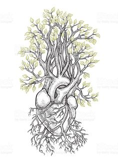 Human heart from which grows a tree royalty-free stock vector art