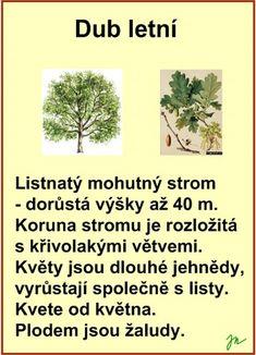 STROMY :: Béčko-Tc Štístkové Flora, School, Garden, Plants, Autism, Jar, Garten, Lawn And Garden, Gardens