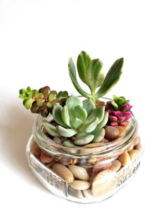 Succulents in Small Mason Jar 8 oz by 2CraftyCougs on Etsy, $10.99