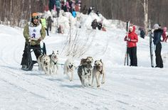 Got plans this weekend?  If there's snow on the ground, why not take in a local dog sled race?