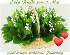Lily Of The Valley, Daffodils, Simply Beautiful, Trees To Plant, Wild Flowers, Succulents, Herbs, Garden, Plants
