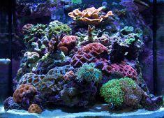 Mini_GBR - 2009 Featured Nano Reefs - Featured Aquariums - Monthly Featured Nano Reef Aquarium Profiles - Nano-Reef.com Forums #aquarium