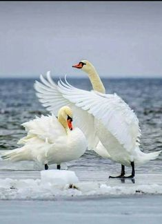 Shelter Under My Wings!