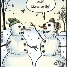 look stem cells!