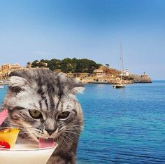 Nyter ferien...