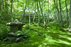mossy Japanese garden, Kyoto