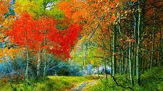 Camino por el bosque de otoño, colores de otoño wallpaper