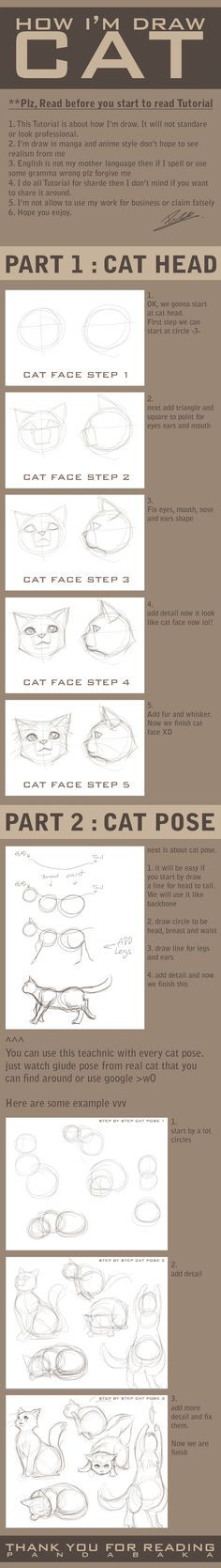 animal Cat drawing tutorial how I draw cat by pandabaka on deviantART - these things help for a lot of things, take note and just leave it till you need it! Drawing Lessons, Drawing Techniques, Drawing Tips, Drawing Reference, Drawing Sketches, Art Lessons, Sketching, Drawing Ideas, Cat Drawing