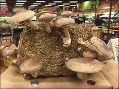 In-Store Mushroom Farm As Wegman's Food Prop