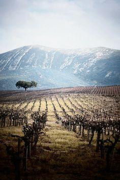 Bacalhoa Vinhos de Portugal - Serra de Azeitao