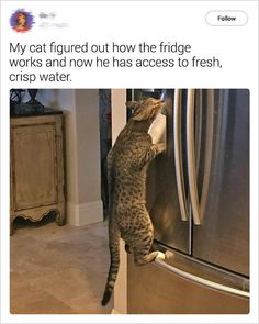 Everything Funny - Updated Hourly! - Thousands of Funny Pictures, Funny Text Messages, Funny Memes, Quotes and More for Hours of Entertainment! Funny Animal Memes, Cute Funny Animals, Funny Animal Pictures, Cute Baby Animals, Funny Cute, Cat Memes, Animals And Pets, Cute Cats, Funny Memes