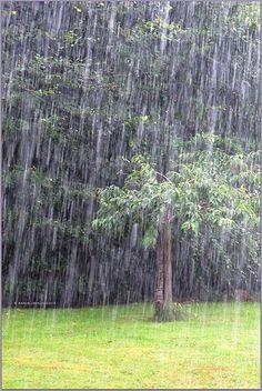 Raining cats and dogs vratsagrl.blogspot.ie/2013/07/rain-rain-rain.html