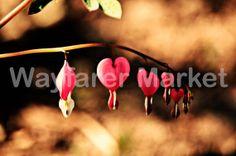 Bleeding Hearts by Mandy Solomon 8x10 Print by WayfarerMarket, $20.00