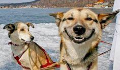 犬のことわざ故事成語世渡り上手になる術も犬ことわざが教えてくれる