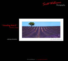 A little bit of spring lavender in Provence from Scott Williams