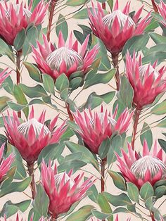 'Painted King Proteas on Cream ' Art Print by micklyn