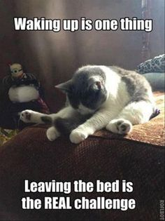 Leaving Bed is another thing