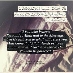 Surah Al-Anfal Verse 8
