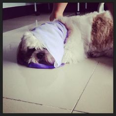 Purple scarf :D #briefy #imissyou #dogtime