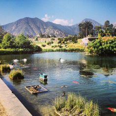 El parque tiene juegos y espacio para jugar y andar en bici. También tiene una laguna donde pueden llevar botes a control remoto. Ideal para un picnic en un día con sol.