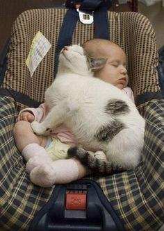 cats are good for keeping babies warm