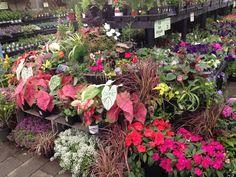Floral Wreath, Wreaths, Garden, Plants, Decor, Floral Crown, Garten, Decoration, Door Wreaths