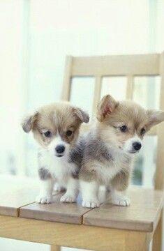 So very cute!!!