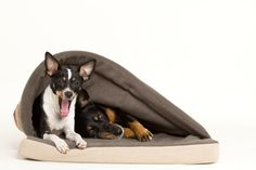 sleeping bag for dogs :)