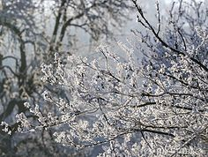 Photo about In snowy forest ,snowflakes covered tree branch. Image of white, winter, nature - 83533630 Snowy Forest, Blurred Background, Tree Branches, Snowflakes, City Photo, Dandelion, Stock Photos, Seasons, Winter