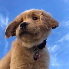 Dog And Puppies Drawings .Dog And Puppies Drawings Super Cute Puppies, Baby Animals Super Cute, Cute Little Puppies, Cute Little Animals, Cute Dogs And Puppies, Cute Funny Animals, Baby Dogs, Doggies, Corgi Puppies