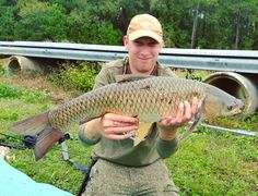 Another beautiful grass carp caught and released while freelining....