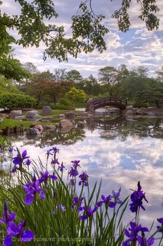 ~~Osaka Japanese Garden by Anne Belmont Photography~~