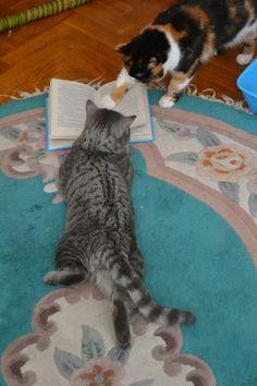 kitty book club