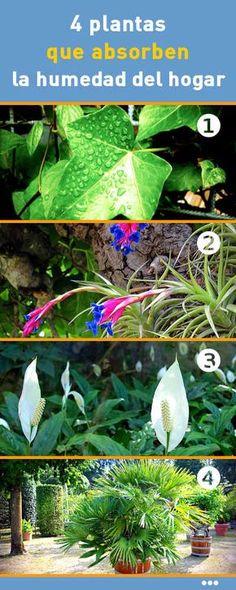 4 #plantas que #absorben la #humedad del #hogar #combatir #aumentar #casa