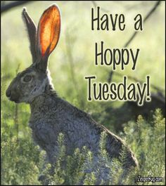 Have A Hoppy Tuesday Jack Rabbit Photo Glitter Graphic, Greeting, Comment, Meme or GIF Funny Good Morning Images, Good Morning Image Quotes, Morning Quotes, Good Morning Saturday, Good Morning Friends, Sunday, Different Types Of Animals, Bambi And Thumper, Rabbit Photos
