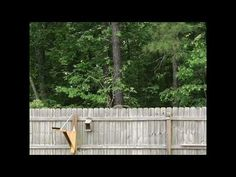 SUBSCRIBE Squirrel catapult - PLANS TO MAKE ONE: https://sowl.co/DwV5I - YouTube